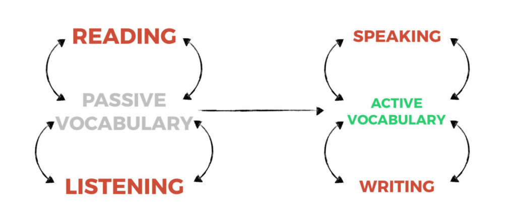 Passive and Active Vocabulary